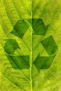 ecological recycling concept - stock photo