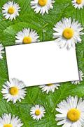 Stock Photo of floral background with white blank card