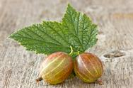 Gooseberries with leaf Stock Photos