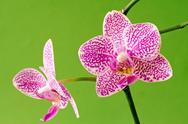 Stock Photo of violet orchid on green background