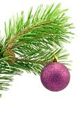 pine branch with purple bauble - stock photo
