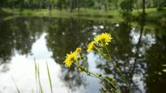 Summer wild flower near lake and wind Stock Footage