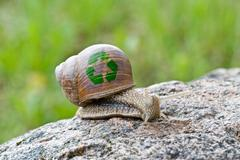 snail with recycle symbol - stock photo