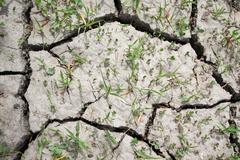 Säröillä ja rutikuiva kuivan maan kuivuuden Kuvituskuvat