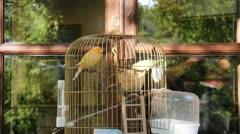 Birds in cage outdoor barbershop Stock Footage