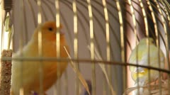 Birds in Cage Stock Footage