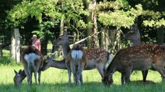 Nature and Wildlife Element - Deer herd C Stock Footage