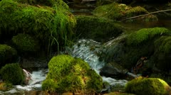 Forest stream clean fresh water running over mossy rocks Stock Footage