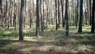 Trees forest in  sunlight Stock Footage