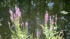 Stock Video Footage of Riverside plants