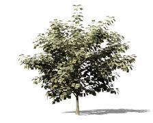 Money tree metaphor Stock Illustration
