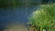 Riverside plants Stock Footage