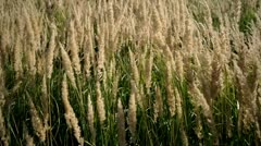 Grass swaying in the wind. - stock footage