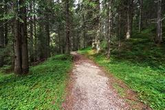 Alpine forest Stock Photos
