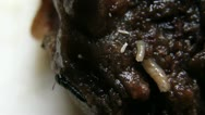 Stock Video Footage of rotten food pests