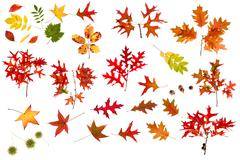 big autumn leaves collection - stock photo
