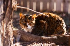 Cat's Backyard 02 - stock photo