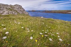 Wild flowery coastline hdr Stock Photos