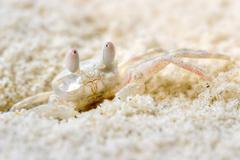 Strange mimetic crab Stock Photos