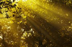 morning sunbeam. - stock photo