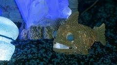 Decorative lighting in aquarium Stock Footage