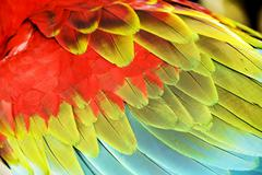 Colourful wings Stock Photos