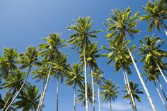 Palmuja Kuvituskuvat