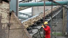 Worker controls Sugar beet on conveyor Stock Footage