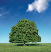 perfect tree and blue sky - stock photo
