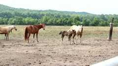 Momma and cute baby horse Stock Footage
