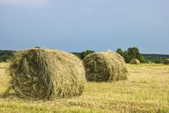 hay stacks on the field - summer rural landscape - stock photo