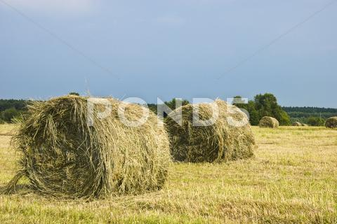 Stock photo of hay stacks on the field - summer rural landscape