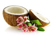 Two pieces of ripe coconut with flowers Stock Photos