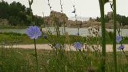 Violet Flowers at Sylvan Lake Stock Footage