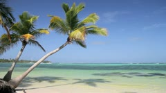 Palms on caribbean beach Stock Footage