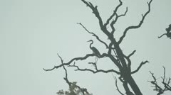 Heron in a Tree Stock Footage