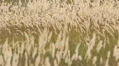 Grass fluttering in the summer wind Stock Footage