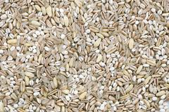 grain texture - stock photo