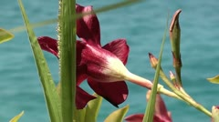 The beauty sea flower Stock Footage