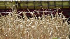 Wheat harvest detail - stock footage