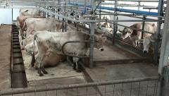 Cowshed 2 Stock Footage