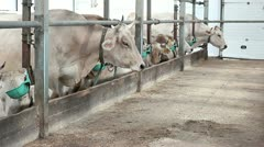 Cowshed 4 Stock Footage