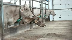 Cowshed 6 Stock Footage