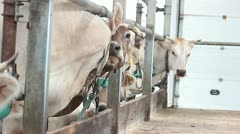 Cowshed 8 Stock Footage