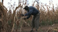 African farmer - stock footage