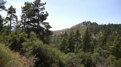 San Bernardino National Forest pine and brush Stock Footage