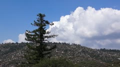 San Bernardino  National Forest pine and clouds Stock Footage