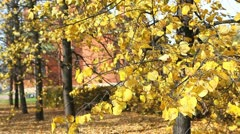 Autumnal trees - stock footage