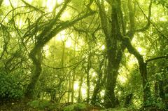 mossy rainforest - stock photo