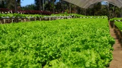 hydroponics - stock footage